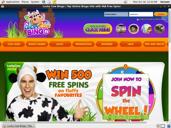Lucky Cow Bingo Upgrade Account